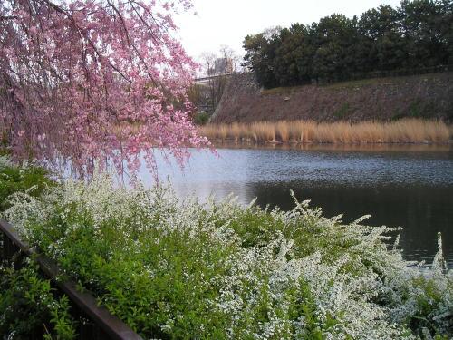 500お堀と桜.jpg