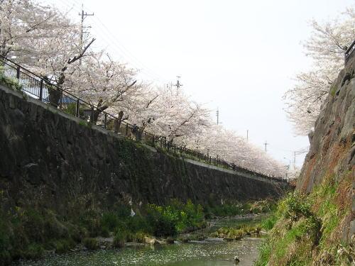 500山崎川下全景.jpg
