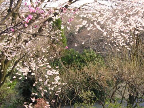 500東山梅林と枯草.jpg