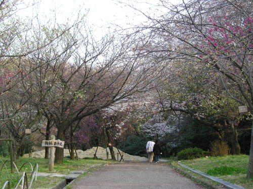 500東山梅林散歩道遠景.jpg