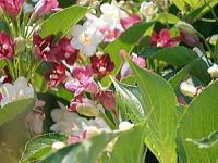 200川辺の花.jpg