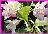 200川辺花1.jpg