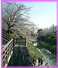 200桜階段.jpg