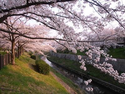 400山崎川1.jpg