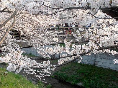 400山崎川14.jpg