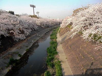 400山崎川9.jpg