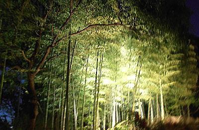400白鳥庭園6竹藪.jpg
