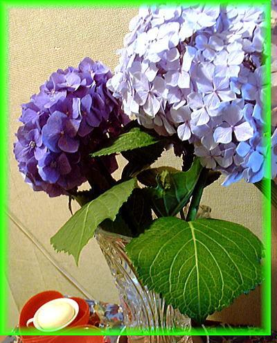 400紫陽花②.jpg