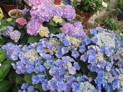 400紫陽花ガーデン①.jpg