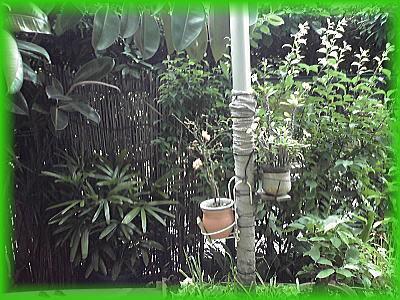 400連れ庭2.jpg