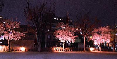 400マンション桜ライトアップ.jpg