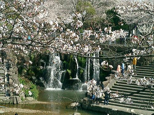 500山崎川滝.jpg