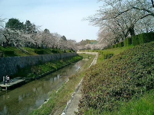 500山崎川4.jpg