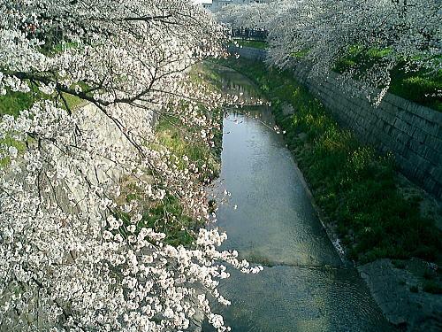 500山崎川6.jpg