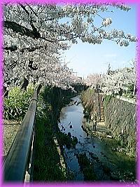 200桜川.jpg
