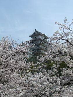 250縦桜姫路城.jpg