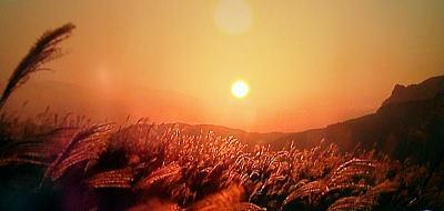 400奈良曽根のすすき.jpg