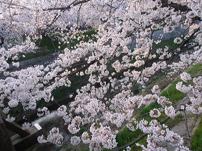 400山崎川4.jpg