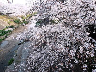 400山崎川8.jpg