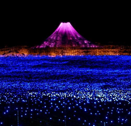 500紫富士.jpg
